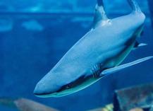 Grand Aquarium de Touraine - Lussault-sur-Loire