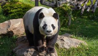 ZooParc de Beauval - Saint-Aignan