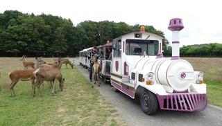 Safari Train - Autrèche