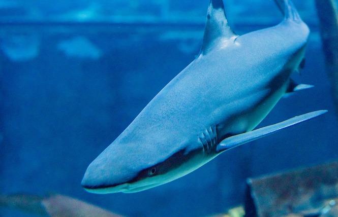 Grand Aquarium de Touraine 2 - Lussault-sur-Loire