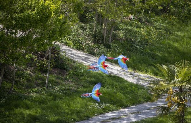 ZooParc de Beauval 20 - Saint-Aignan