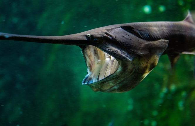 Grand Aquarium de Touraine 6 - Lussault-sur-Loire
