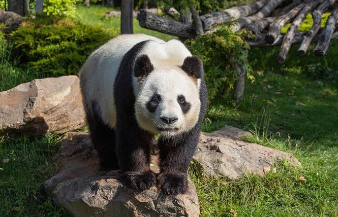 ZooParc de Beauval 5 - Saint-Aignan
