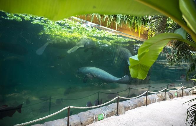ZooParc de Beauval 16 - Saint-Aignan