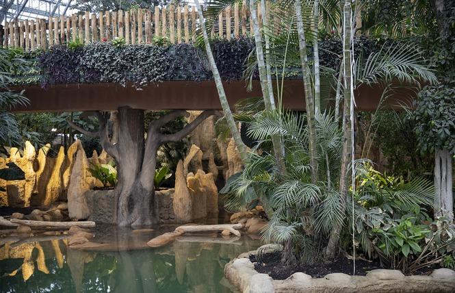 ZooParc de Beauval 22 - Saint-Aignan