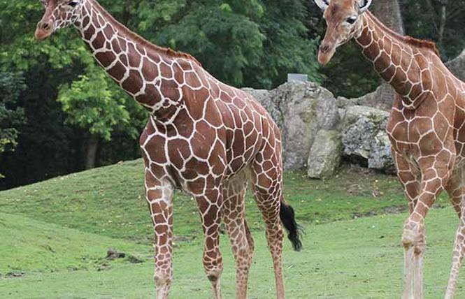 ZooParc de Beauval 15 - Saint-Aignan